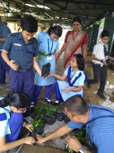 Sapling Making (Std VII)